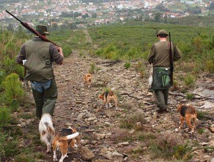 La temporada de caza menor arranca este domingo en Galicia con 40.000 cazadores y buenas previsiones de conejo