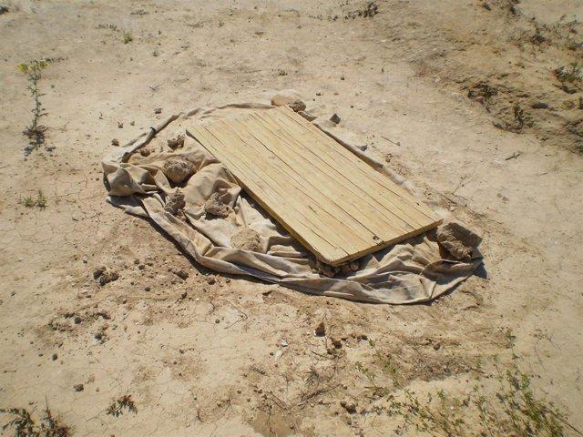 Robo De Un Esqueleto De La Necrópolis De Castilleja De Guzmán