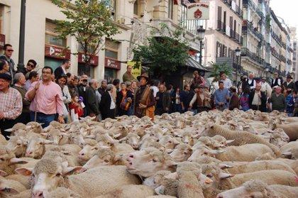 Dos mil ovejas desfilarán este domingo por el centro de Madrid para celebrar la Fiesta de la Trashumancia