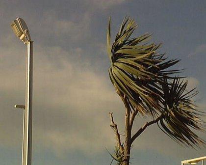 La caída de árboles derribados por el viento en Mérida y Badajoz obliga a intervenir a los bomberos