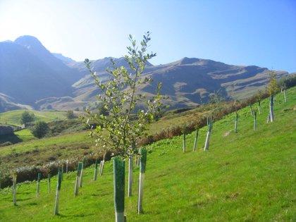Hoy se celebra una jornada de repoblación en las cabeceras fluviales de la montaña cantábrico-burgalesa