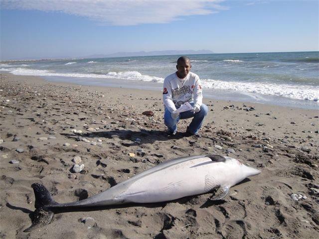 Ejemplar de delfín joven aparecido en Costacabana