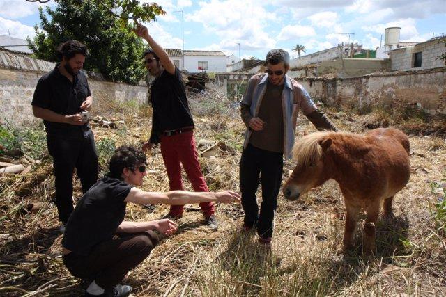 Teatro Central: Nota Y Fotografía Pony Bravo 24 Noviembre