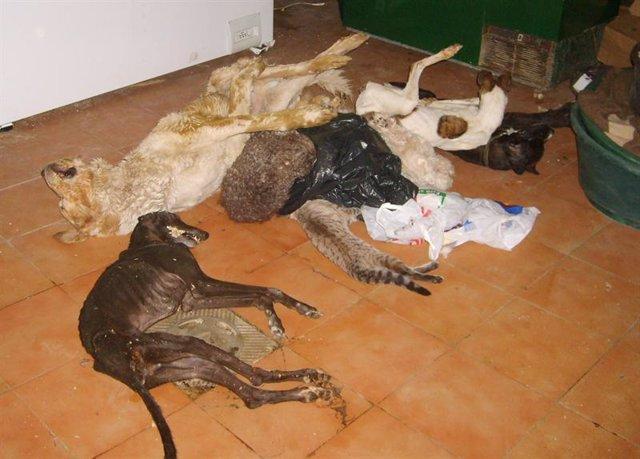Imagen de perros afectados