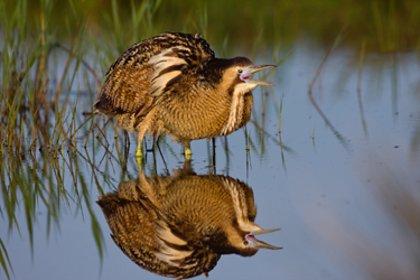 La reintroducción de aves ayuda a conservar la biodiversidad