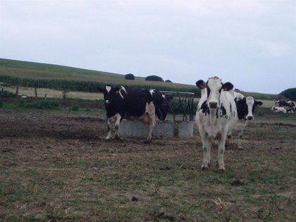 El MARM convoca ayudas por los daños del temporal de junio en producciones agrícolas y ganaderas