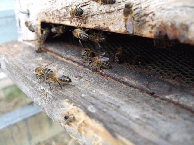 Colmena con abejas