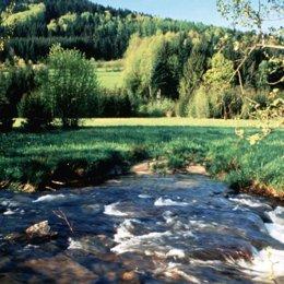 naturaleza rio prado agua arboles