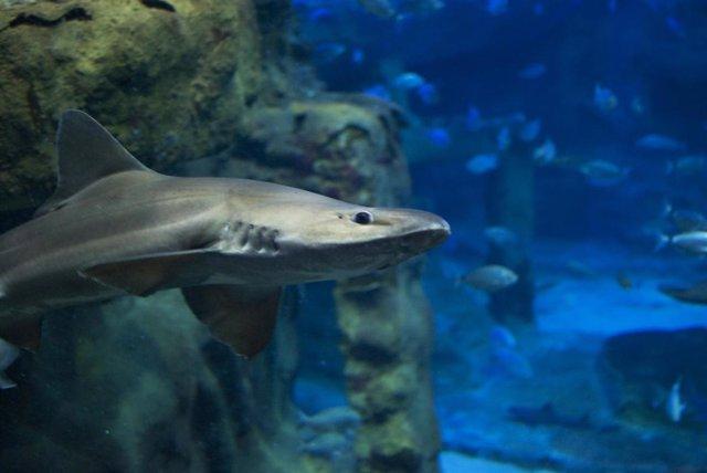 Tiburones del Aquarium de San Sebastián