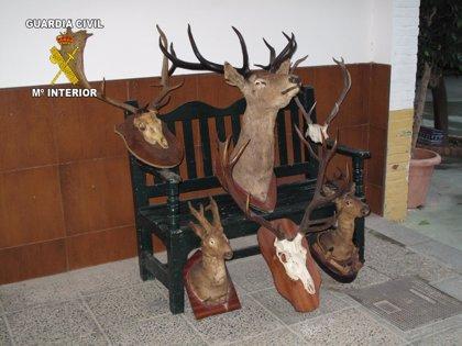 Guardia Civil denuncia a los propietarios de dos fincas de Castellar y Jimena por supuesto furtivismo