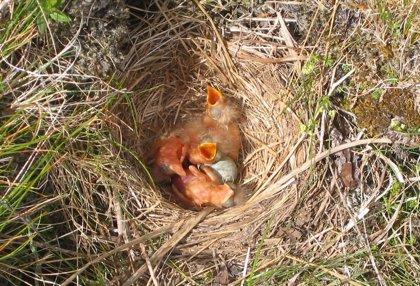 Las características del nido afectan a las aves