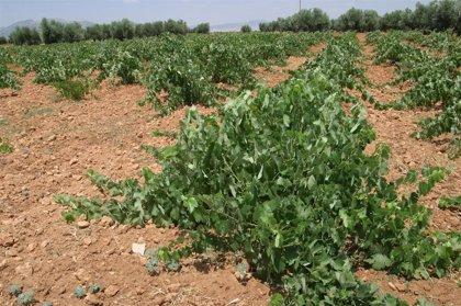 La renta agraria se sitúa en 22.547,5 millones en 2010, según el MARM