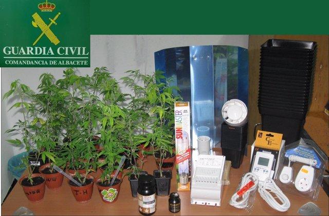 operación marihuana