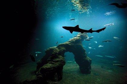 El Museo Marítimo del Cantábrico ofrece visitas virtuales a través de su web con acceso a los acuarios