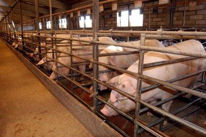 Sanidade pone en marcha un proyecto pionero de acreditación conjunta de las unidades analíticas de los mataderos