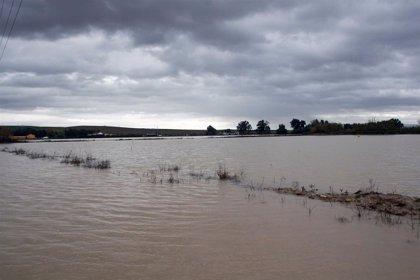 Temporal.- El desbordamiento del arroyo Argamasilla provoca la quinta inundación en Écija en menos de un mes