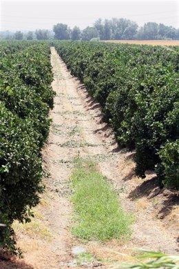 Cultivos de Andalucía