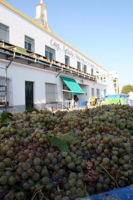 Cooperativa agrícola productora de vino