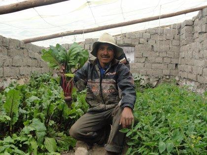 Perú.-Ayuda en Acción construye 382 invernaderos en tres provincias peruanas para luchar contra la desnutrición infantil