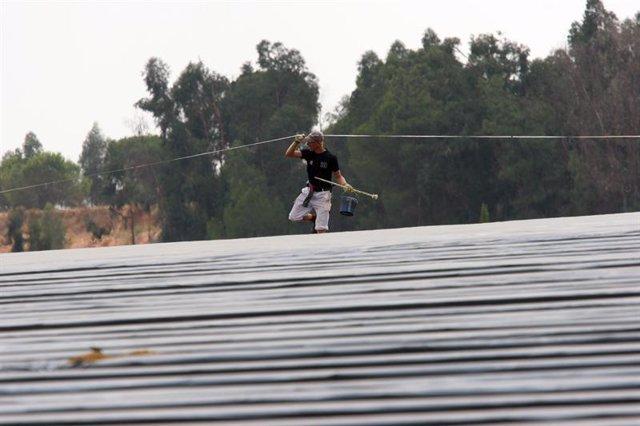 Imagen de un trabajador en una plantación de fresas de Huelva
