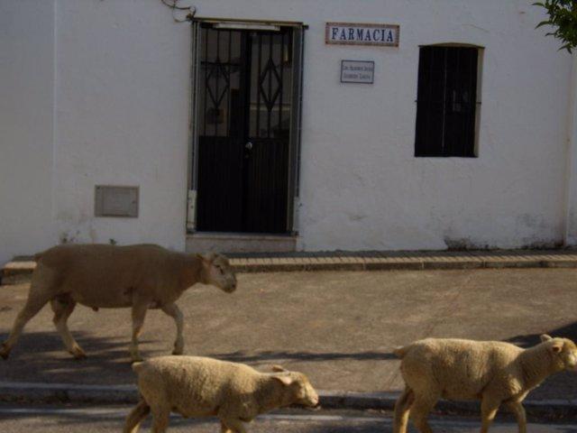 Farmacia de El Madroño en Sevilla