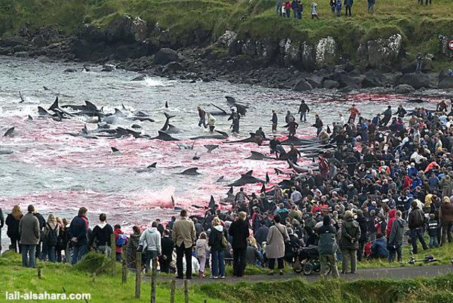 Matanza de ballenas en Islandia