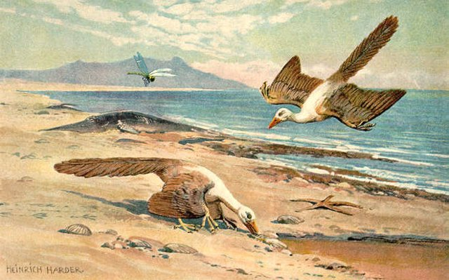 Archaeopteryx'