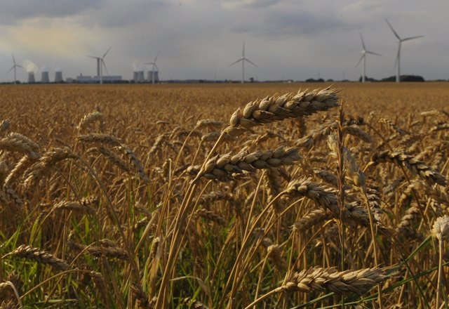 Cereales Con Energía Eólica