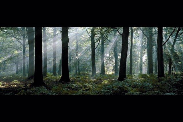 Bosque De Hayas, Bélgica