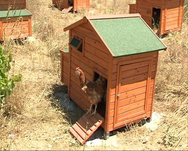 Chalet Acondicionado Para Gallinas De Avícola Redondo