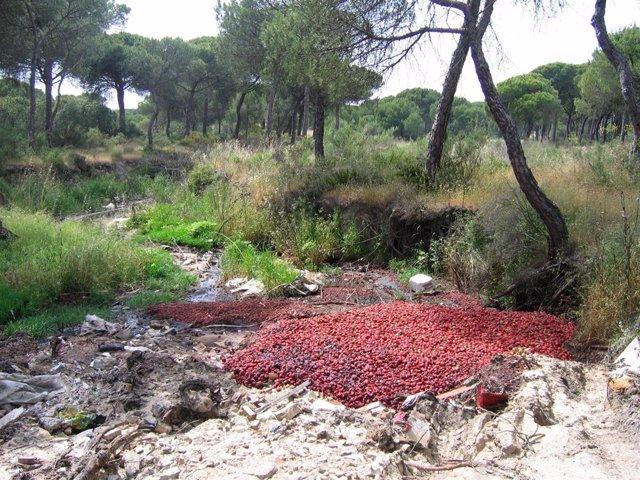 Contaminación En Un Arroyo De Doñana