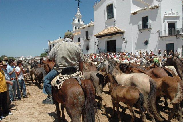 Tradicional 'Saca De Las Yeguas' En El Rocío