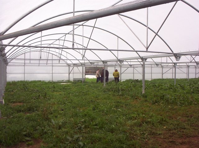 Invernadero, Agricultura