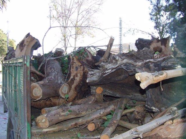 Imagen de la tala de árboles