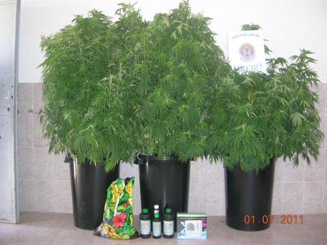 Marihuana Incautada En Loeches