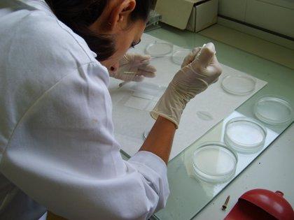 Convierten células de piel humana en células funcionales del cerebro