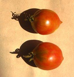 El tomate, cultivo tradicional catalán