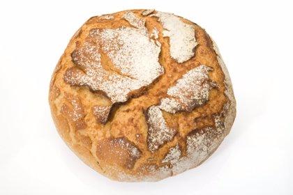 La levadura de panadería protege contra infecciones mortales