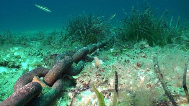 Detalle Del Impacto De Los Fondeos Sobre La Posidonia Oceánica En Baleares.