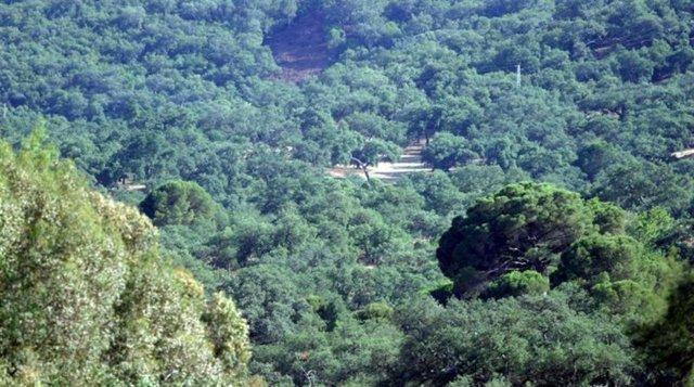 Imagen de una zona forestal en Andalucía