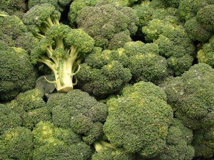 Acompañar los alimentos con brócoli aumenta su poder a la hora de combatir el cáncer