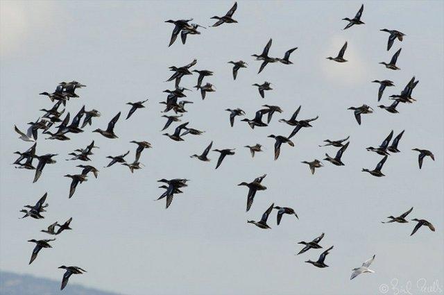 Aves invernantes