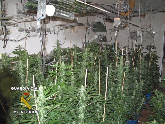 Invernadero Marihuana En Cijuela