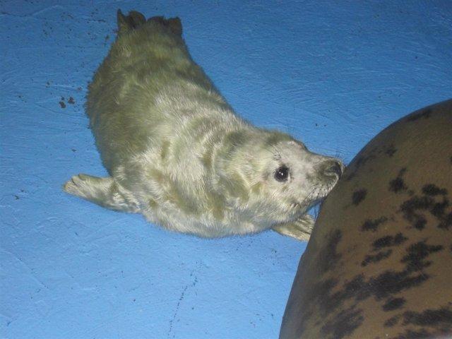 Nace una foca en el Zoo de Madrid