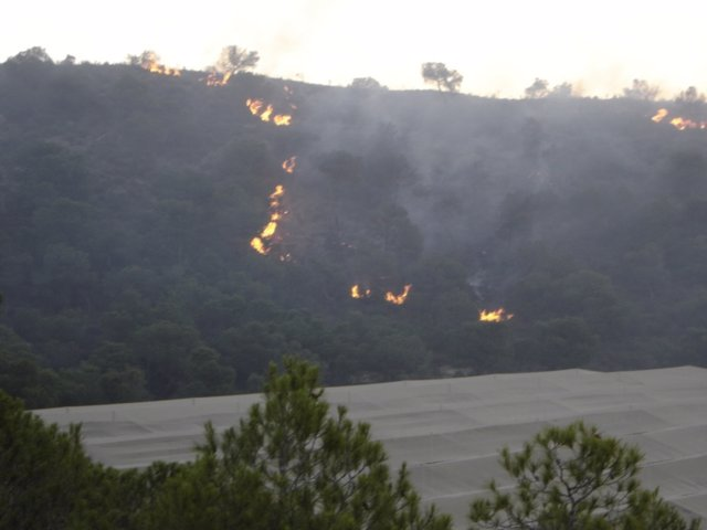Incendio Forestal Registrado En Pilar De La Horadada