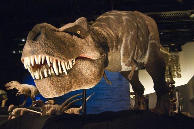 El Parque De Las Ciencias Acoge Una Muestra De Dinosaurios