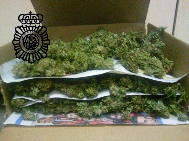 Marihuana Intervenida Por La Policía En Castellón.