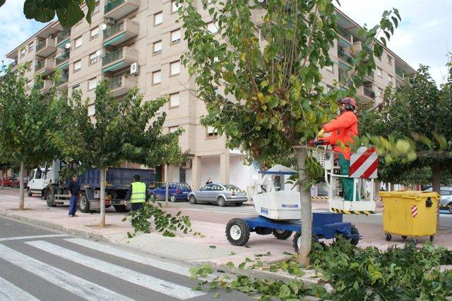 Poda De Árboles En Alcañiz