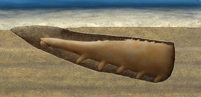 Reconstrucción Del Fósil Encontrado