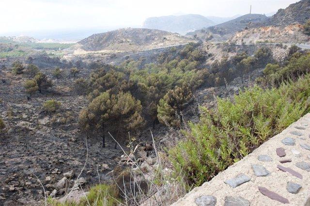 Hectáreas Afectadas Por El Incendio De Cartagena